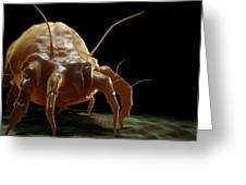 House Dust Mite Greeting Card