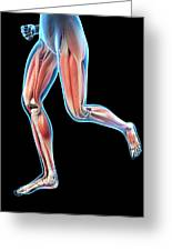 Human Leg Muscles Greeting Card
