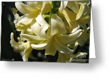 Hyacinth Named City Of Haarlem Greeting Card