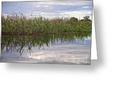 IImages From The Pantanal Greeting Card