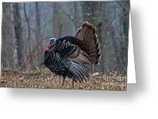 Jake Eastern Wild Turkey Greeting Card