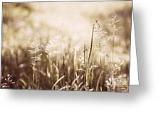 June Grass Flowering Greeting Card