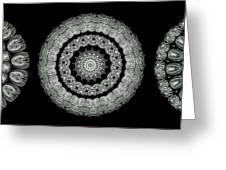 Kaleidoscope Ernst Haeckl Sea Life Series Black And White Set On Greeting Card by Amy Cicconi