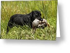 Labrador Retriever Greeting Card
