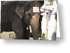 Lakshmi Temple Elephant Greeting Card