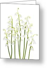 Lily-of-the-valley Flowers  Greeting Card