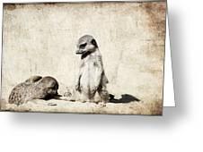 Meerkatz Greeting Card