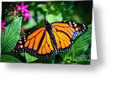 Monarch Danaus Plexippus Greeting Card