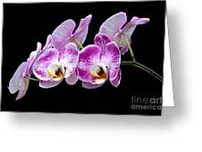 Moon's Orchid  Greeting Card