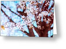 New Jersey Spring Greeting Card