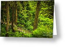 Path In Temperate Rainforest Greeting Card