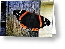 Phoenician Butterfly Greeting Card
