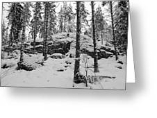 Pine Forest Winter Greeting Card
