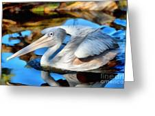 Pink Backed Pelican Greeting Card