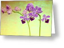 Purple Orchid-8 Greeting Card