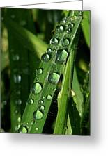 Raindrops Greeting Card