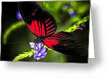 Red Heliconius Dora Butterfly Greeting Card
