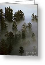 Redwood Creek Overlook With Giant Redwoods Sticking Out Above Lo Greeting Card