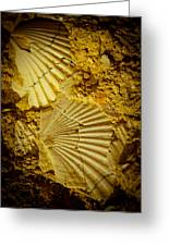 Seashell In Stone Greeting Card