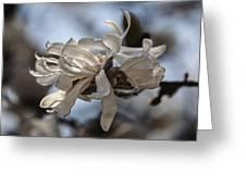 Spring April 2013 Magnolia Blossoms Greeting Card