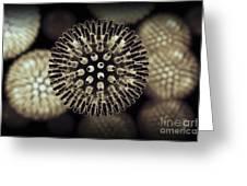 Swine Influenza Virus H1n1 Greeting Card