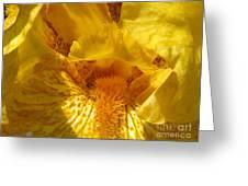 Tall Bearded Iris Named Saharan Sun Greeting Card