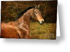 The Bay Horse Greeting Card