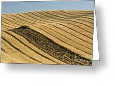 Tracks In Field Greeting Card