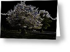 Tree With Large White Flowers Greeting Card