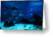 Underwater View Greeting Card