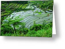 Unesco World Heritage Site, Rice Greeting Card
