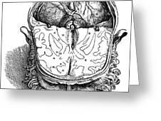 Vesalius: Brain, 1543 Greeting Card
