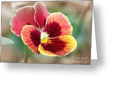 Viola Named Penny Red Blotch Greeting Card