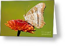 White Peacock Butterfly Greeting Card