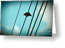 5 Wire 2 Greeting Card