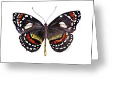 50 Elzunia Bonplandii Butterfly Greeting Card