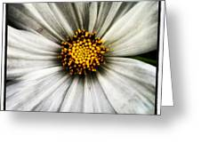 50 Shades Of Flower Greeting Card