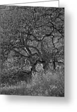 50 Shades Of Gray Trees Greeting Card