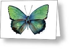 52 Arhopala Aurea Butterfly Greeting Card
