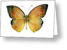 53 Leucippe Detanii Butterfly Greeting Card