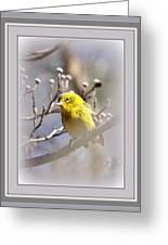 5393-006 - Pine Warbler-fb Greeting Card