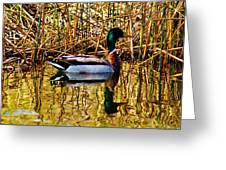 5.4.2014 Wild Mallard Greeting Card