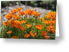 547 Cf Orange Green And Gray Greeting Card