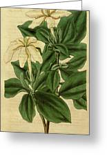 Botanical Print By Sir William Jackson Hooker Greeting Card