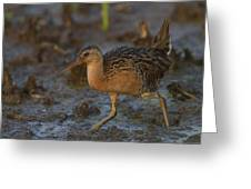 King Rail In A Wetland Greeting Card