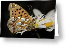 Nature And Travel Images Greeting Card