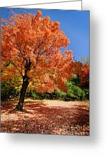 A Blanket Of Fall Colors Greeting Card