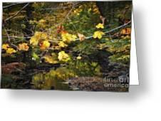 Autumn 2013 Greeting Card