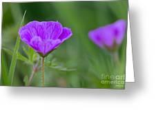 Bloody Geranium Wild Flower Greeting Card