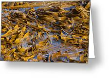 Bull Kelp Blades On Surface Background Texture Greeting Card